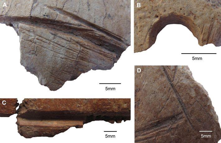 Caveiras de Göbekli Tepe