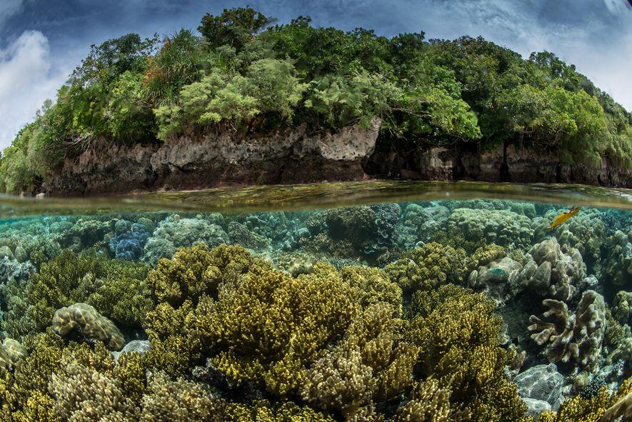 Numa expedição da Pristine Seas a Palau, a equipa descobriu que tanto a água como o ...