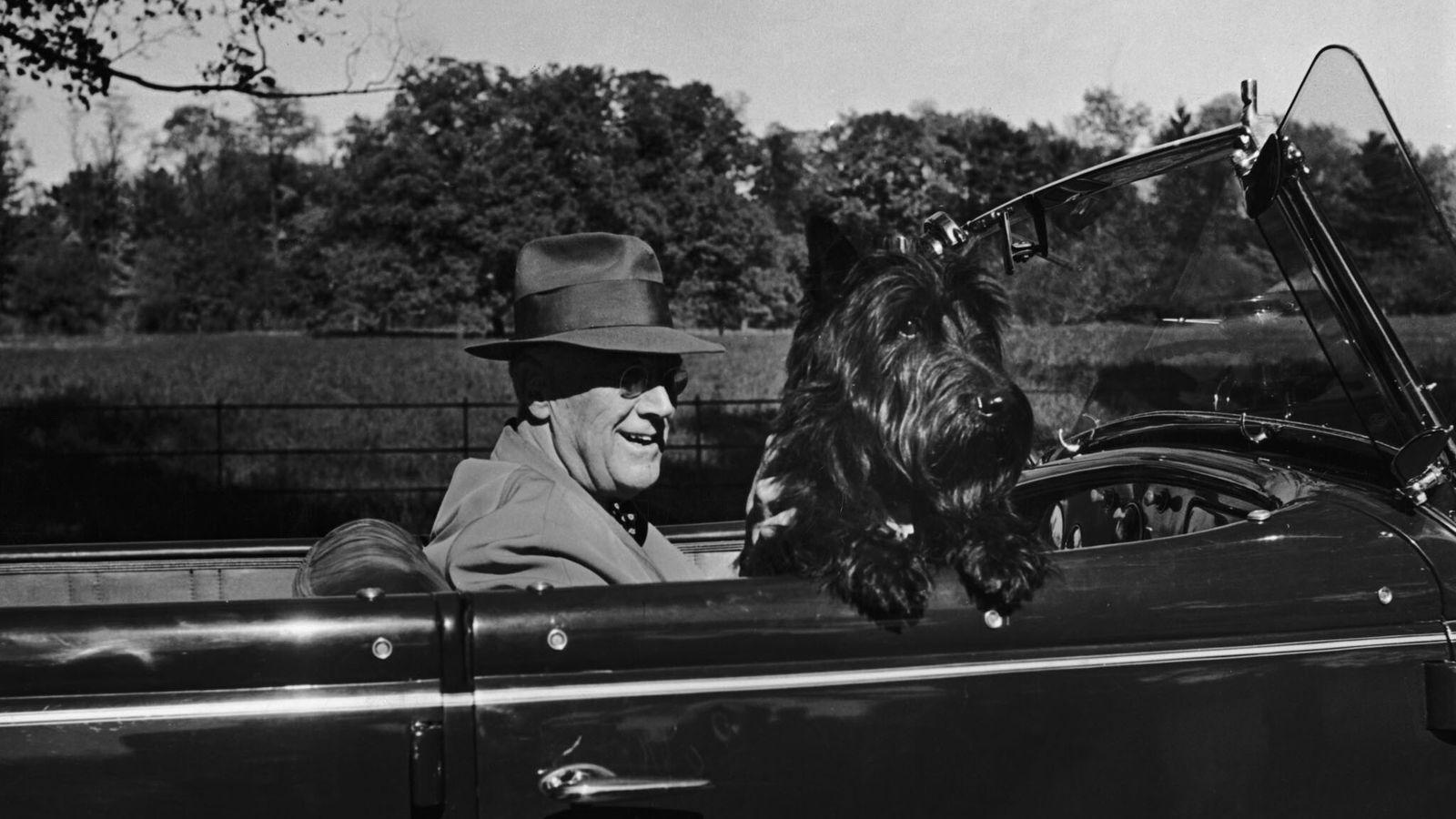 O Presidente Franklin D. Roosevelt a conduzir em Hyde Park, Nova Iorque, com o seu cão ...