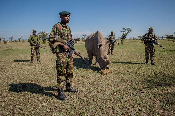 guardas rinoceronte