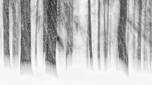 As Melhores Fotos de Árvores para o Dia da Terra