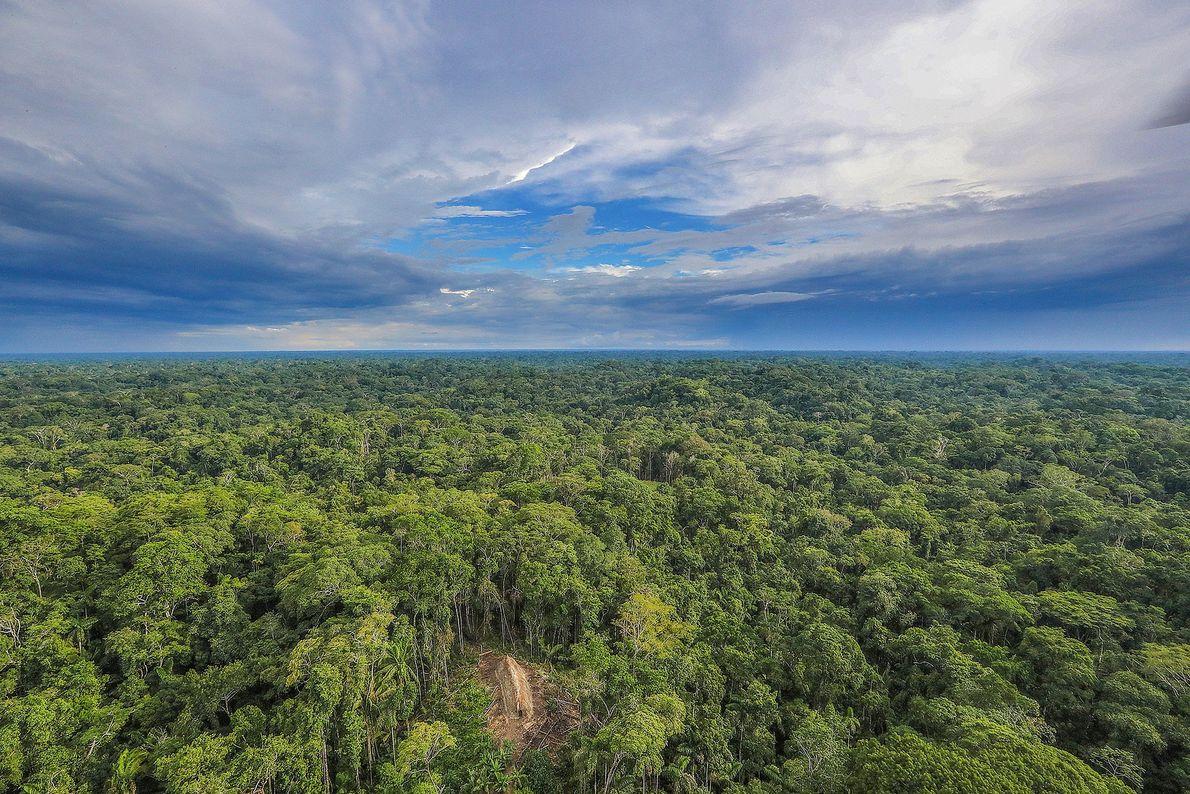 Imagem de uma cabana comprida e com telhado de palha, na selva amazónica, vista de cima. ...