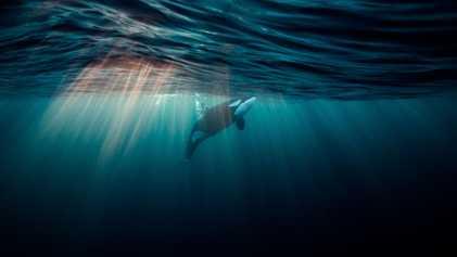 Fotografias Magníficas da Vida Subaquática