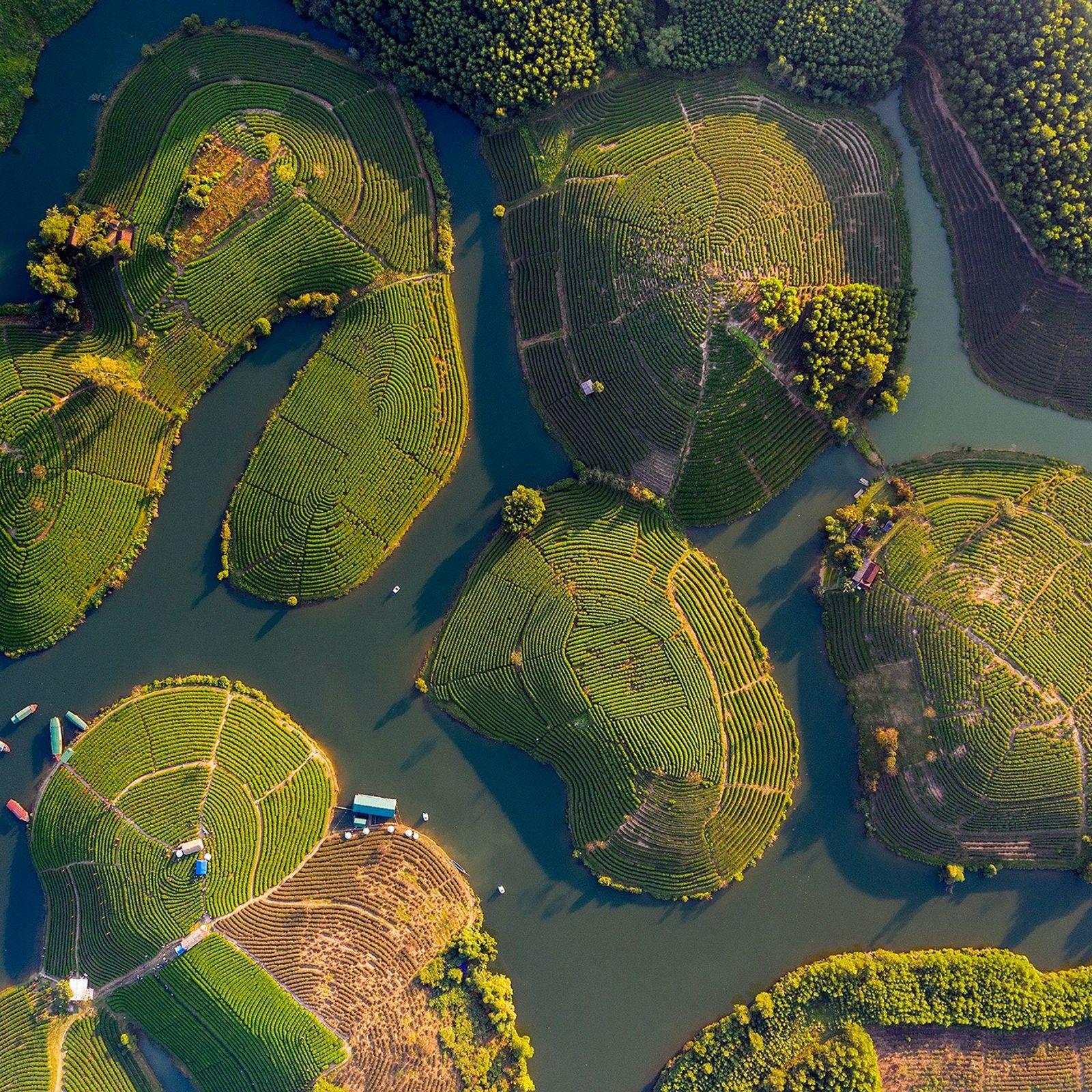 Ilhas de chá verde num lago de irrigação, perto da fronteira do Vietname com o Laos.
