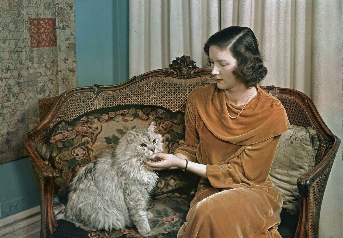 Uma mulher afaga o seu gato persa em Nova Iorque.