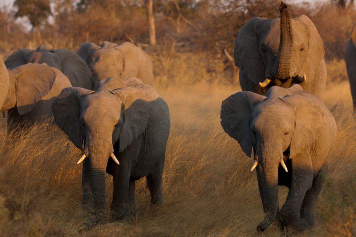 Comércio de Marfim
