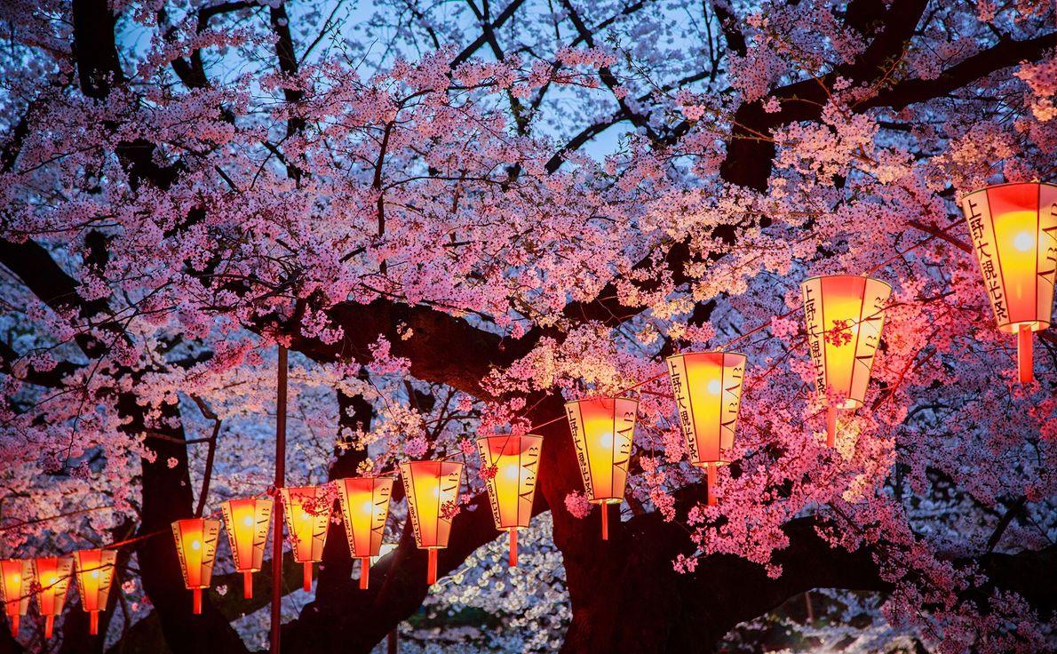 As pessoas reúnem-se todas as primaveras no Parque Ueno para fazerem piqueniques debaixo das árvores em ...