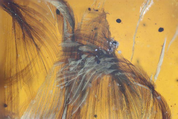 Fóssil de pássaro com 99 milhões de anos