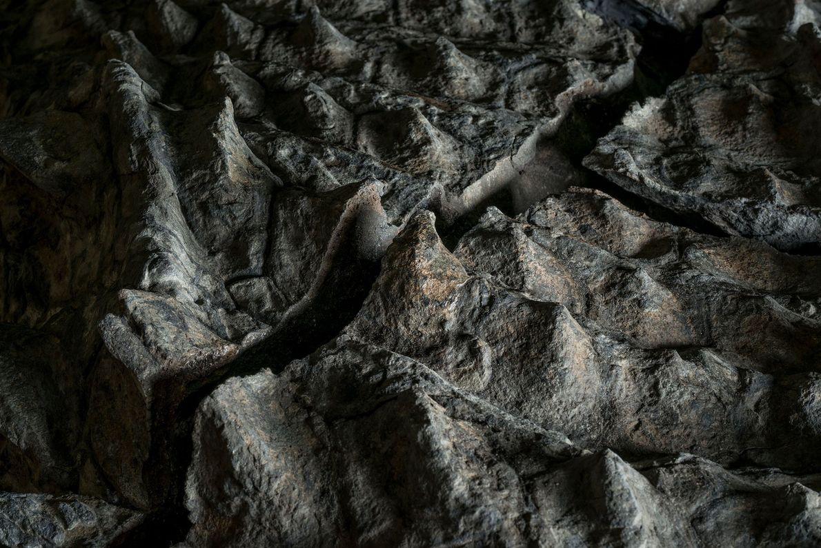 Fóssil de um anquilossauro chamado Borealopelta markmitchelli