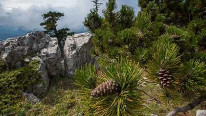 Fotografias da Flora do Parque Nacional de Pollino