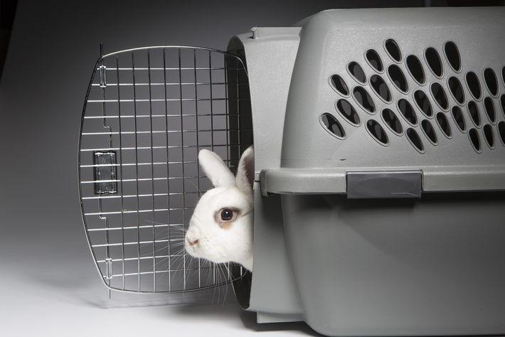 02_rescue_bunnies