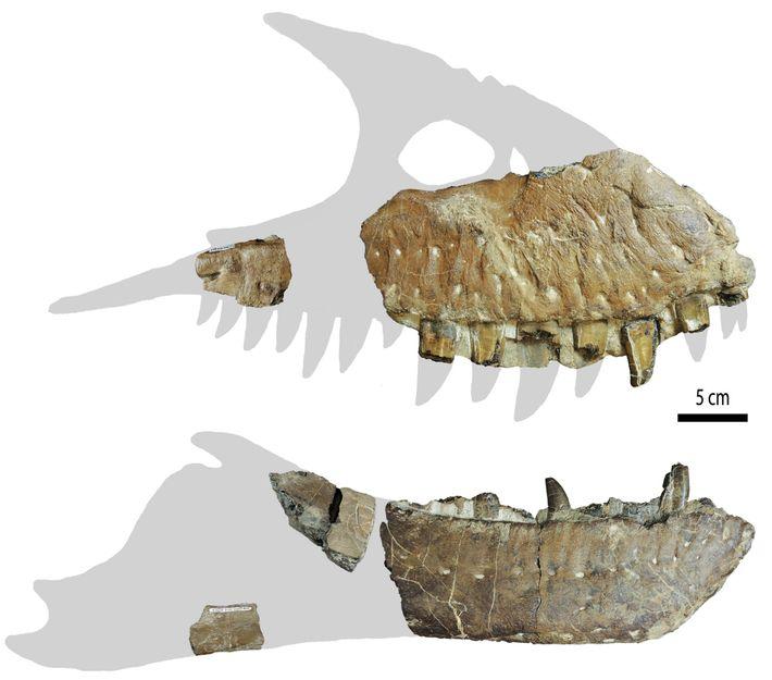 Por enquanto, os fragmentos do crânio são tudo o que resta do 'Thanatotheristes'. Apesar de poderem ...