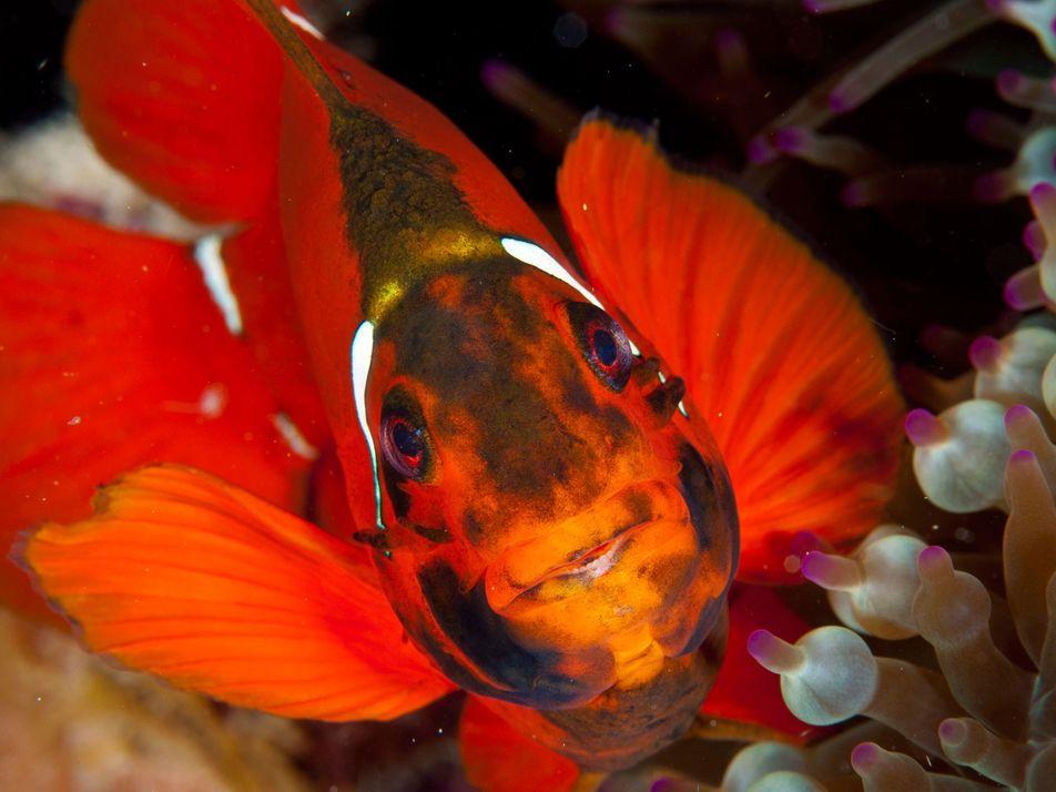 Fotografias da Grande Barreira de Coral