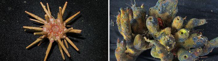 03-recife-amazónico-coral-descoberto