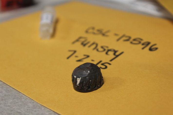 O Centro de Mamíferos Marinhos, em Sausalito, na Califórnia, guarda os fragmentos de balas extraídos dos ...