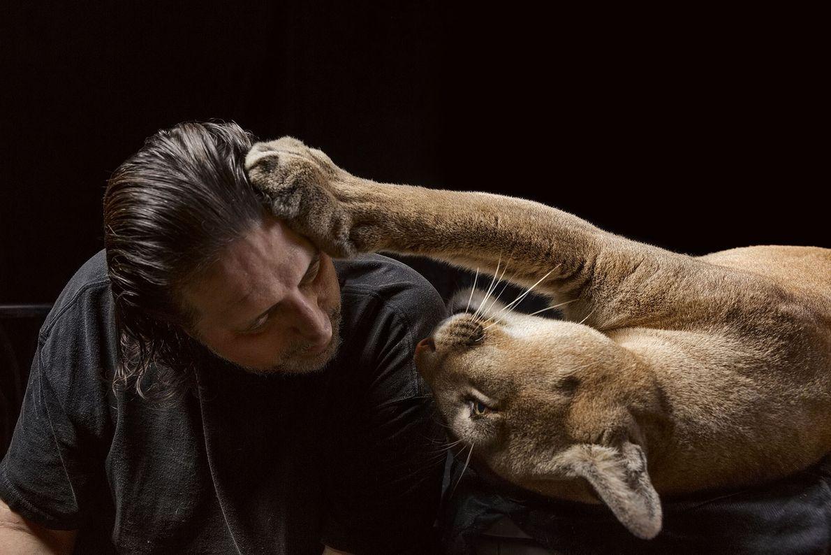 Mario Infanti, que treinou durante mais de mil horas antes de adquirir os seus primeiros felinos ...