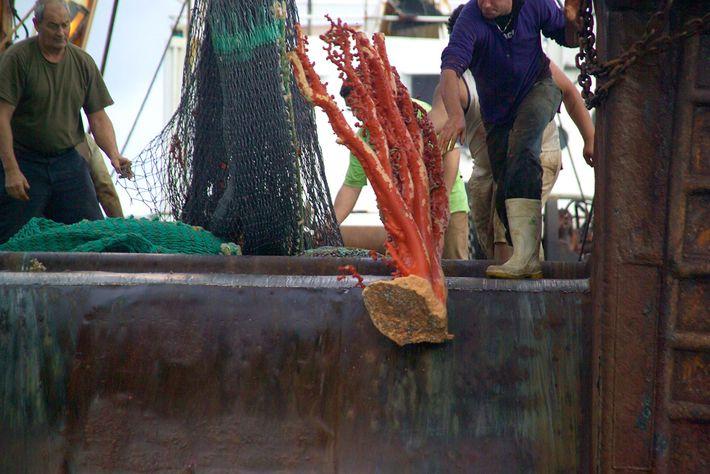 A pesca de arrasto de fundo do mar.