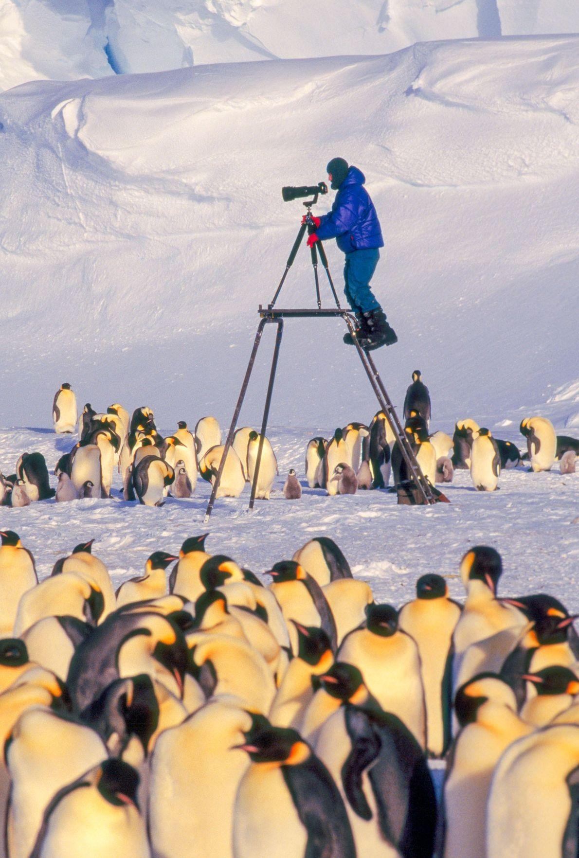 """""""Eu estava a pensar numa perspetiva diferente para fotografar pinguins imperadores nas suas colónias remotas de ..."""