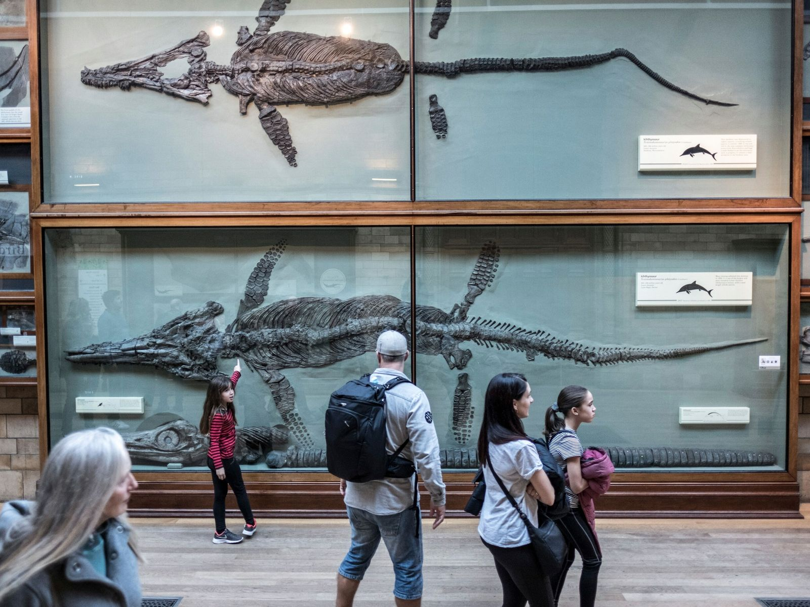 fósseis de Mary Anning