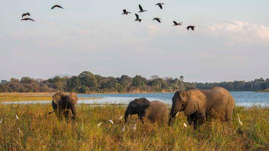 Príncipe Harry Tenta Preservar Parques Africanos