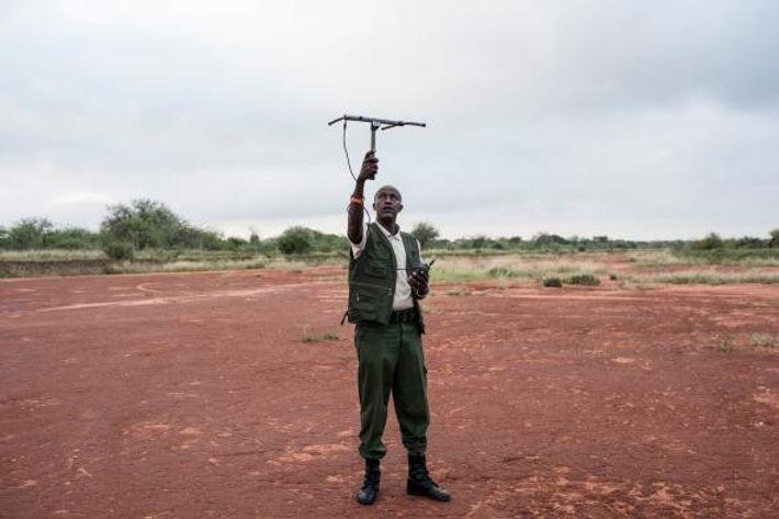 David Daballen, que trabalha com a Save the Elephants, testa o sinal de um dos colares ...