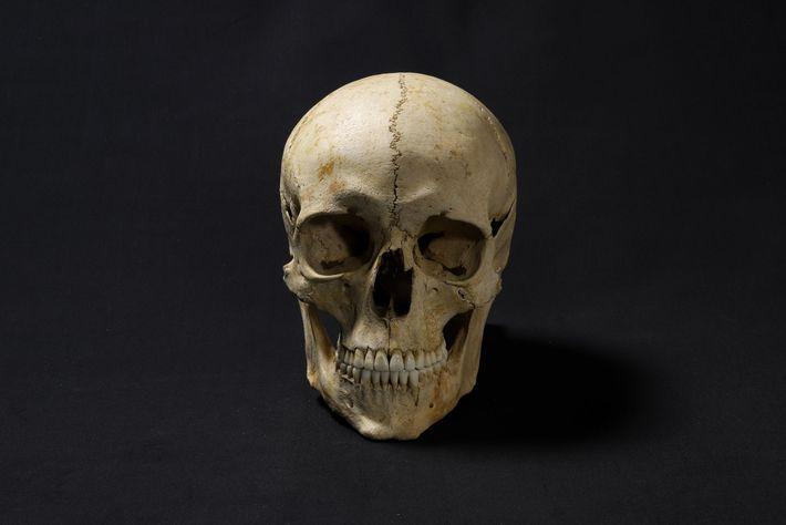 Uma cópia do crânio, impressa em 3D, foi usada como base para a reconstrução facial. Para ...