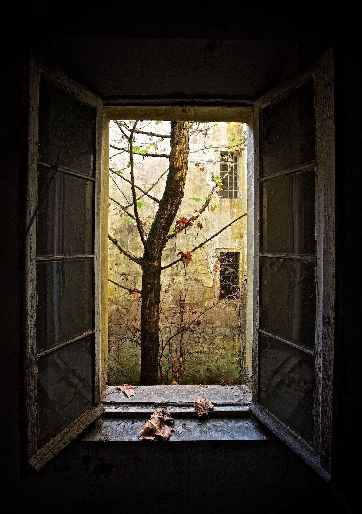 Enquadramento revela um tronco de árvore através de uma janela