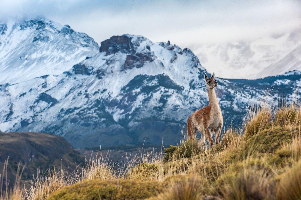 Use Chacabuco para fazer uma paragem de descanso na viagem, ou para ver guanacos e condores ...