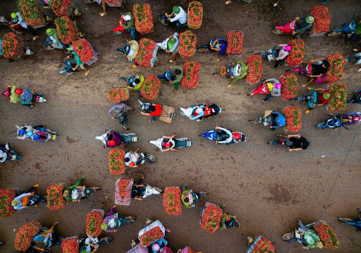 Agricultores a vender líchias, que no Vietname são colhidas todos os anos em junho.