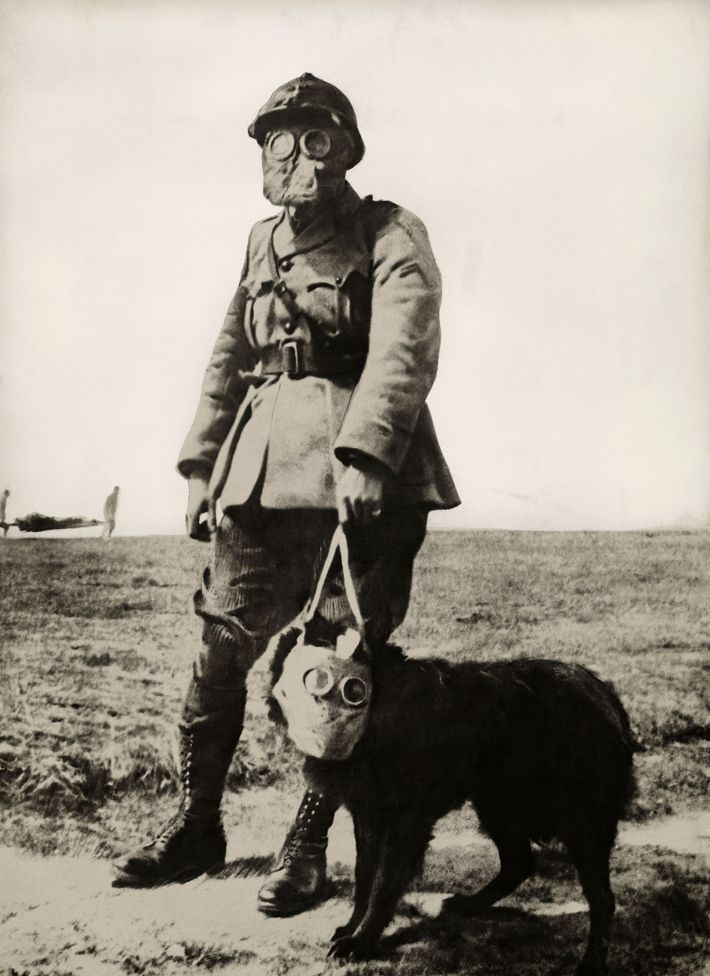 Um soldado e o seu cão procuram feridos, nas zonas de guerra atacadas com gás venenoso.