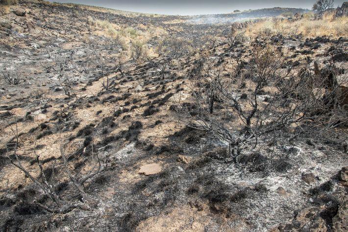 Terra queimada após o incêndio de Duncan, em Boise, no Idaho. Elizabeth Kolbert acredita que a ...