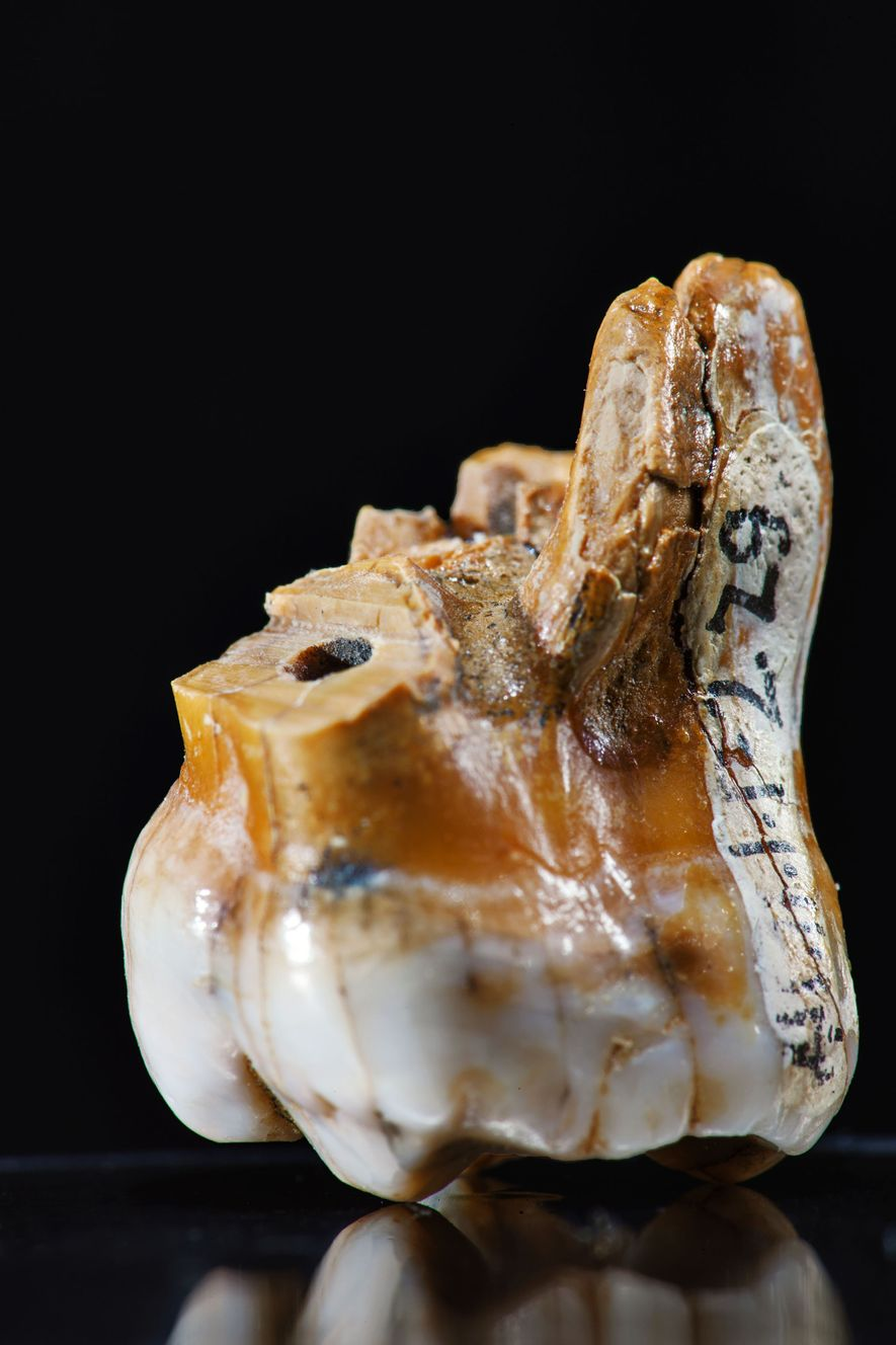 Os cientistas obtiveram todo o conhecimento disponível sobre o hominídeo de Denisova com base em apenas ...