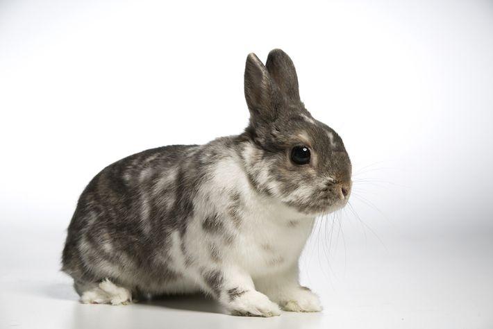 03_rescue_bunnies