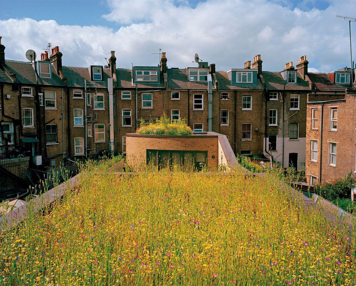Campo de flores silvestres no telhado de uma casa
