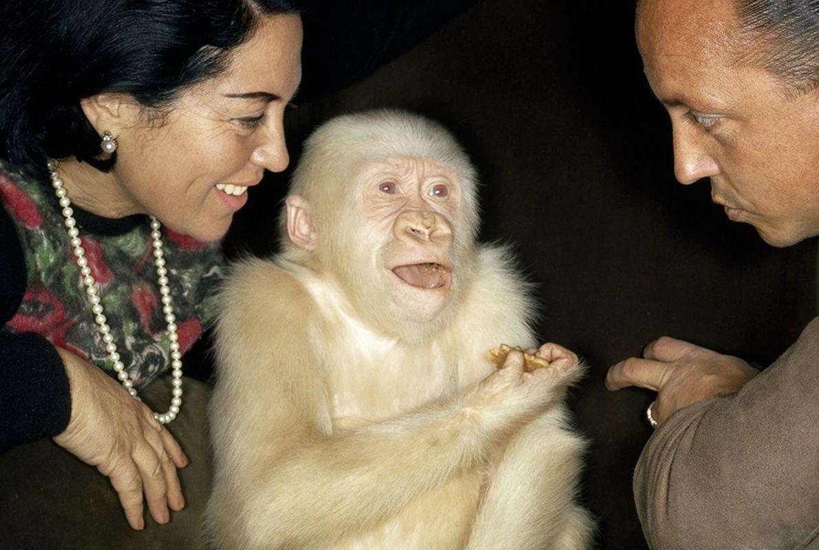 Albino raro