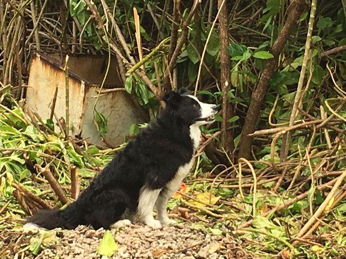 Cão pisteiro deteta odor de ossos humanos