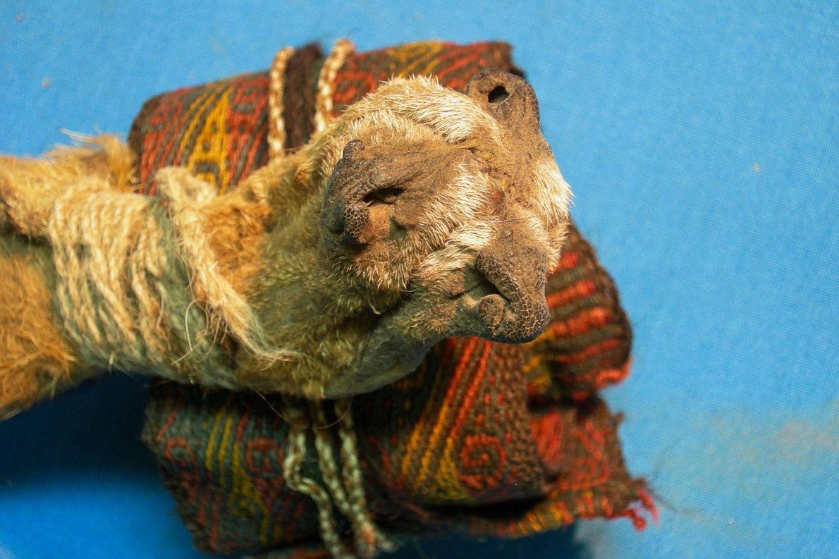 A bolsa, feita de três focinhos de raposa costurados no topo de uma faixa colorida de ...