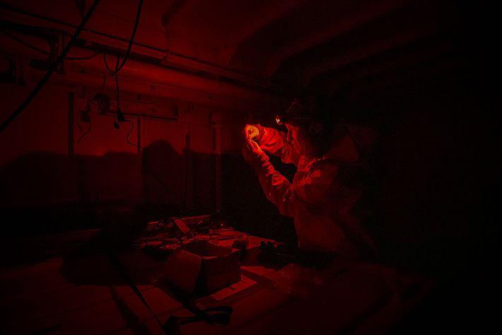 Morgan Bender usa uma seringa para recolher sangue de dois bacalhaus polares. Morgan tem de trabalhar ...