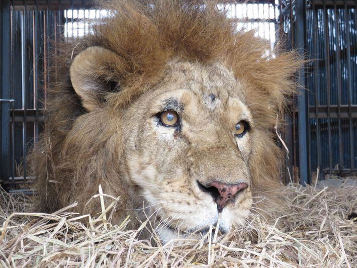 José leão resgatado