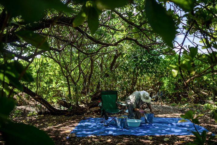 Tom King, antigo arqueólogo-chefe do TIGHAR, verifica amostras de solo recuperadas em Nikumaroro – onde Earhart ...