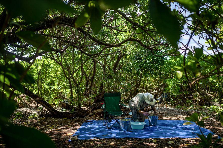 Tom King, antigo arqueólogo-chefe do TIGHAR, verifica amostras de solo recuperadas em Nikumaroro – onde Earhart pode ter procurado abrigo.