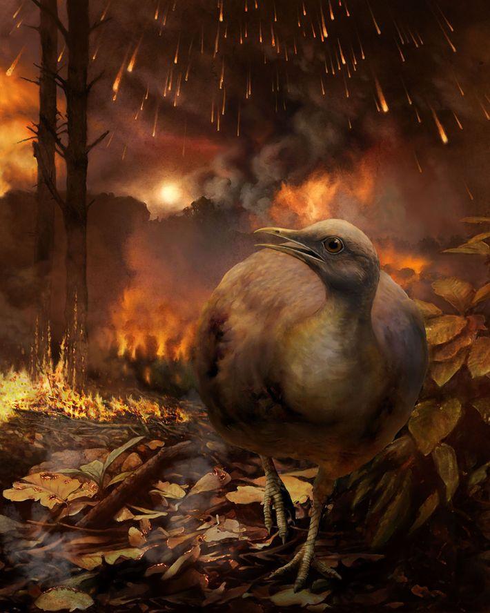 Aves fogem de uma floresta em chamas.