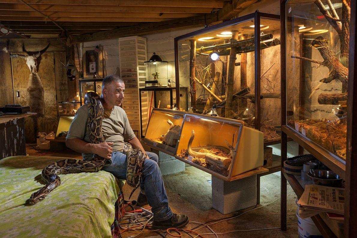 Uma cobra pitão birmanesa entrelaça Albert Killian, na casa da Flórida que ele partilha com 60 ...