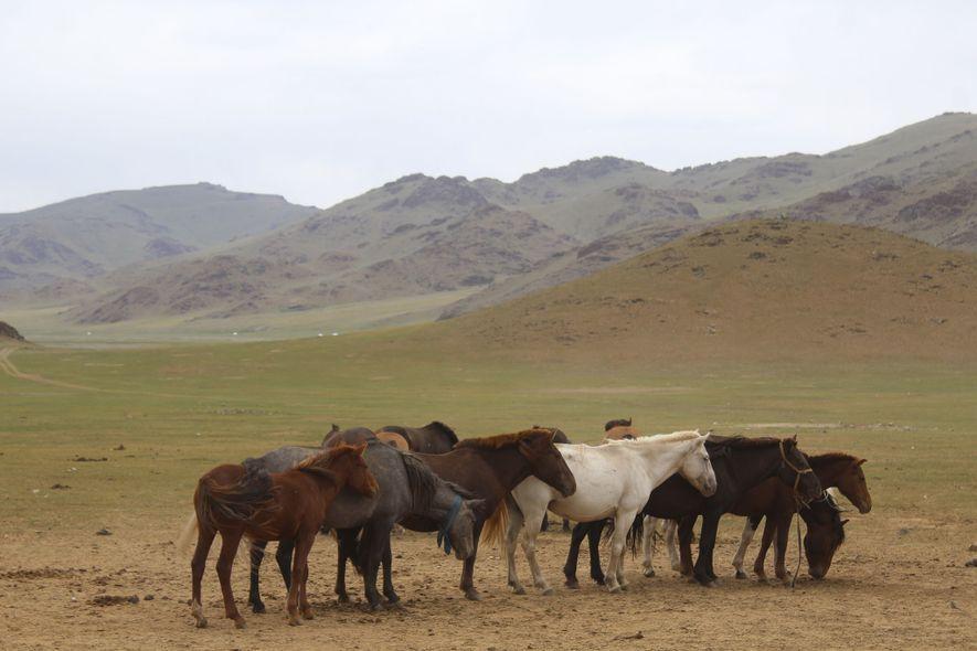 Vários cavalos concentram-se na região centro da Mongólia.