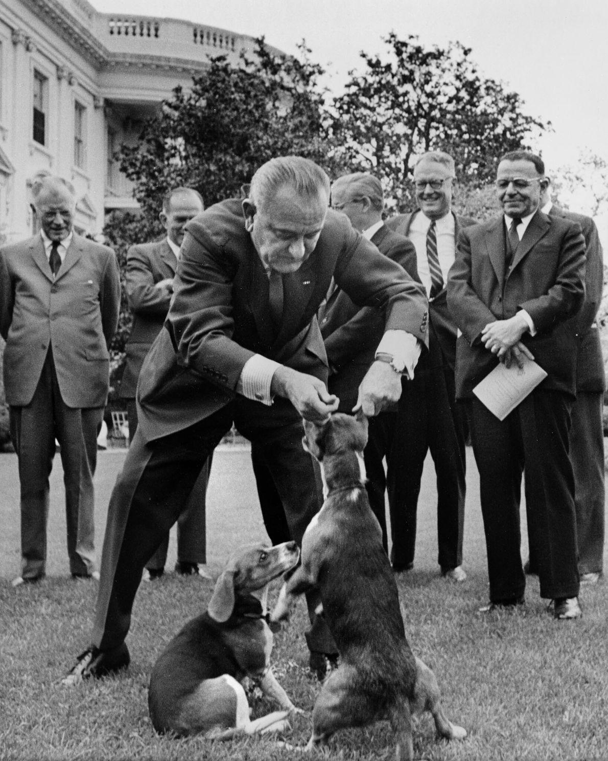 O presidente Lyndon Johnson mudou-se para a Casa Branca com os seus dois beagles Him e ...
