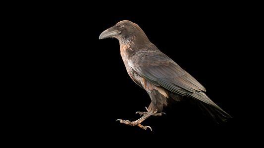 Fotografias de Aves por Joel Sartone