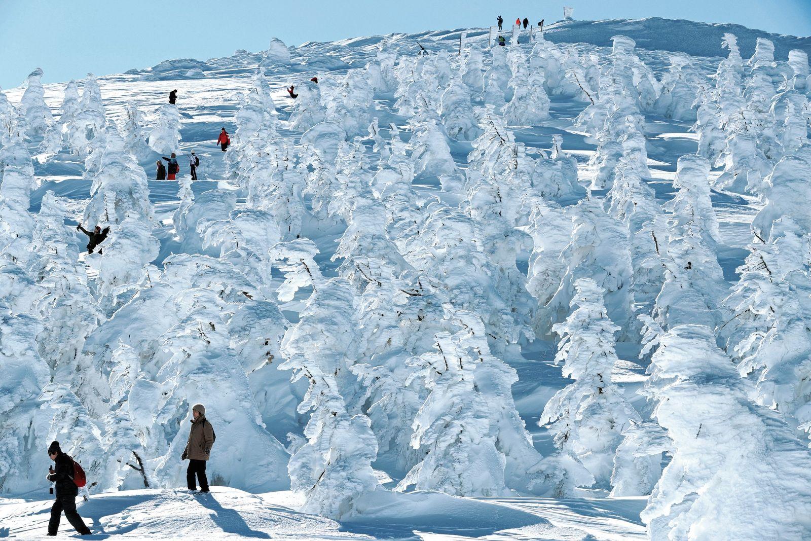 No Japão, as árvores cobertas de gelo, conhecidas por monstros de neve, transformam a estância de ...