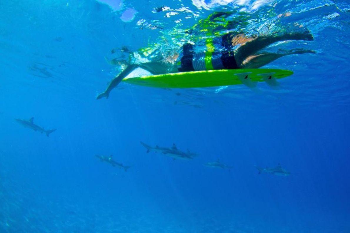 A Nadar com Tubarões