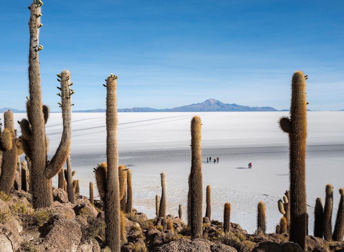O Salar de Uyuni, escondido nos Andes bolivianos, é o maior deserto de sal da Terra. ...