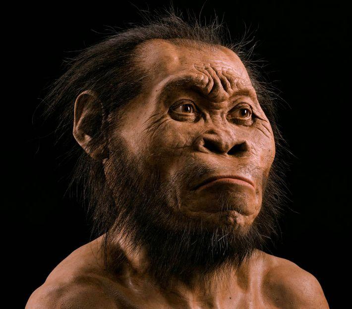 Um novo humano ancestral